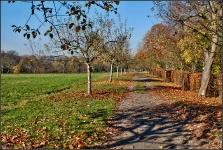 Botanischer Volkspark Berlin 2015 Herbst © Lutz Griesbach_15