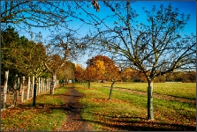 Botanischer Volkspark Berlin 2015 Herbst © Lutz Griesbach_18