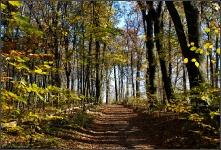 Botanischer Volkspark Berlin 2015 Herbst © Lutz Griesbach_22