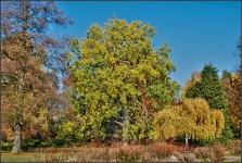 Botanischer Volkspark Berlin 2015 Herbst © Lutz Griesbach_42