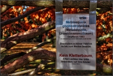 Botanischer Volkspark Berlin 2015 Herbst © Lutz Griesbach_44