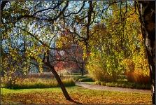 Botanischer Volkspark Berlin 2015 Herbst © Lutz Griesbach_58