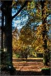 Botanischer Volkspark Berlin 2015 Herbst © Lutz Griesbach_60