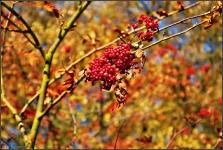 Botanischer Volkspark Berlin 2015 Herbst © Lutz Griesbach_8