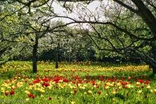 Britzer Garten 2012 Frühjahr