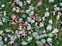 Britzer Garten 2012 Herbst
