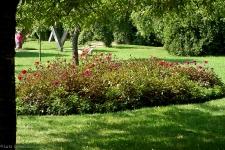 Britzer Garten 2013 Dahlienfeuer