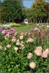 Britzer Garten 2015 Dahlienfeuer © Lutz Griesbach_100