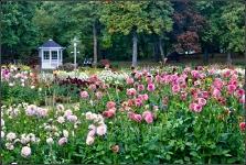 Britzer Garten 2015 Dahlienfeuer © Lutz Griesbach_10