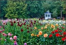 Britzer Garten 2015 Dahlienfeuer © Lutz Griesbach_11