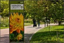 Britzer Garten 2015 Dahlienfeuer © Lutz Griesbach_19