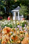 Britzer Garten 2015 Dahlienfeuer © Lutz Griesbach_34