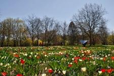 Britzer Garten 2015 Frühjahr © Lutz Griesbach_132
