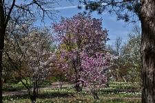 Britzer Garten 2015 Frühjahr © Lutz Griesbach_157
