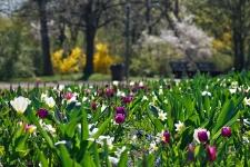 Britzer Garten 2015 Frühjahr © Lutz Griesbach_37