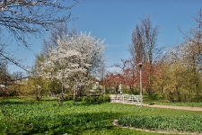 Britzer Garten 2015 Frühjahr © Lutz Griesbach_89
