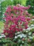 Britzer Garten 2015 Zauberblüten © Lutz Griesbach_3