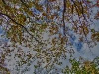 Natur-Park Südgelände Berlin 2012 Herbst © Lutz Griesbach_148