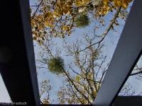 Natur-Park Südgelände Berlin 2012 Herbst © Lutz Griesbach_66
