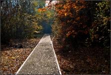 Natur-Park Südgelände Berlin 2015 Herbst © Lutz Griesbach_81
