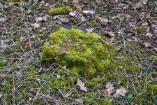 Natur-Park Südgelände Berlin 2015 Ostern © Lutz Griesbach_144